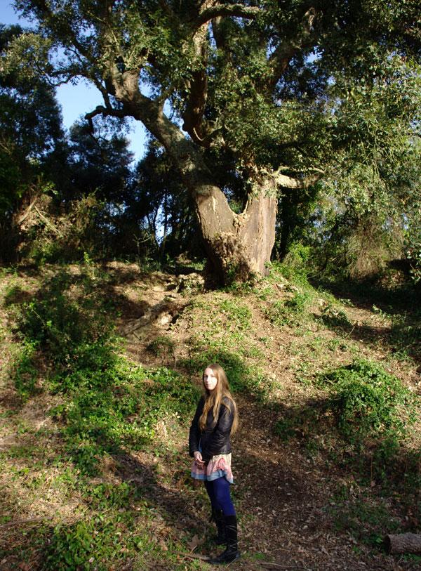 Испанский лес