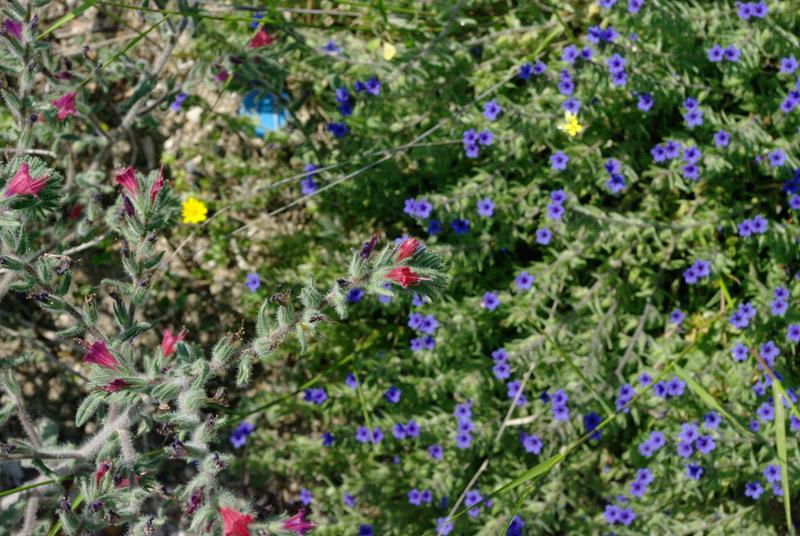 Греция.Цветы.