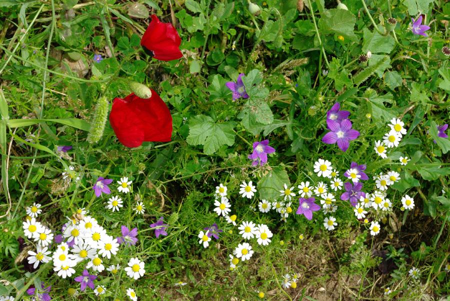 Цветы в Коринфе