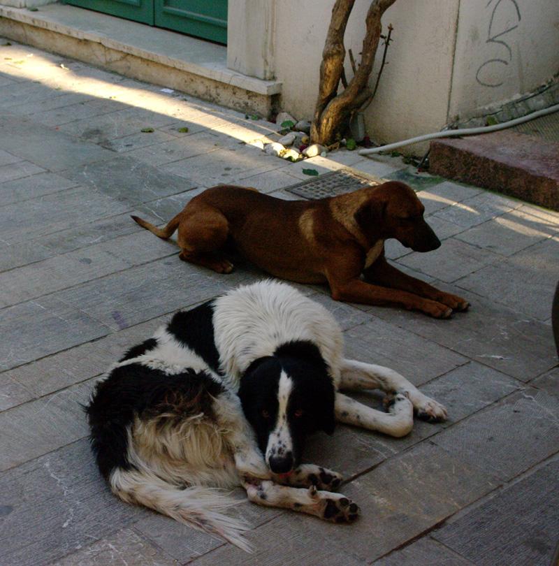 Собаки Нафплеона