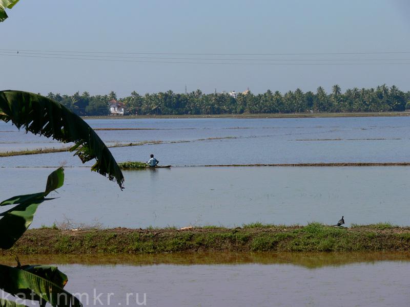 Путешествие на маленькой лодке по внутренним водам Кералы. Рисовое поле.