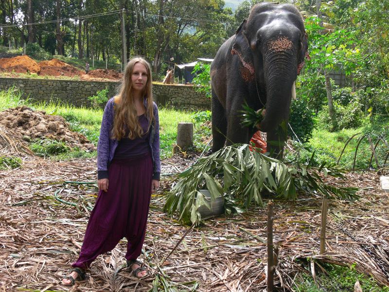 Аюрведический сад. Около Кумли. Слоны в неволе. Слон после купания.