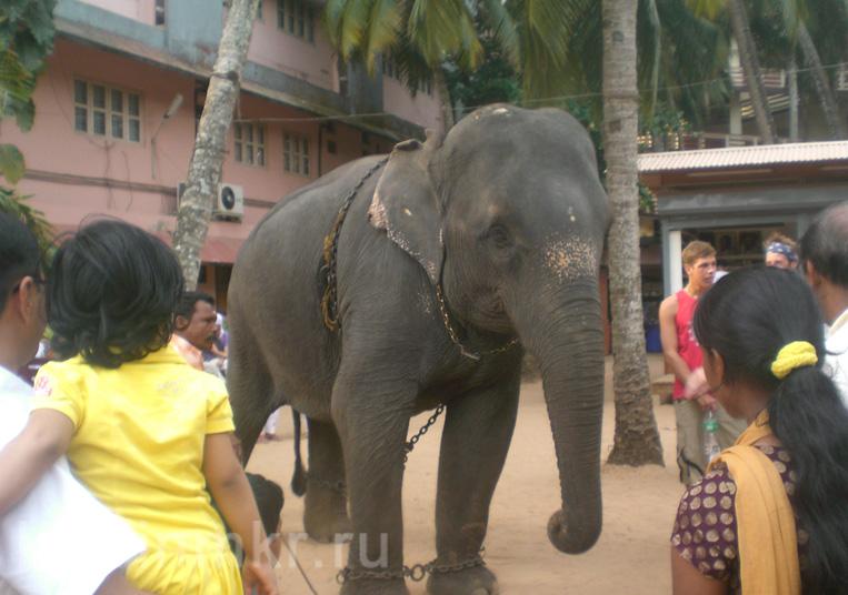Слон в ашраме Аммы Амританандамаи