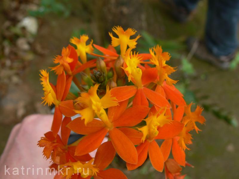 Цветок. На смотровой площадке в джунглях около Кумли.