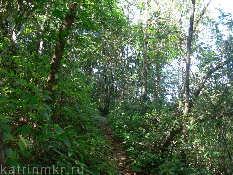 Национальный парк Перияр. Тропы в джунглях.