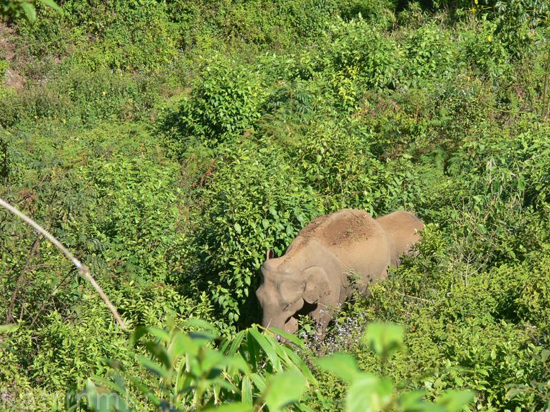 Национальный парк Перияр. Слоны в джунглях.