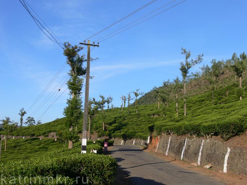 По дороге из национального парка Перияр. Чайные плантации.