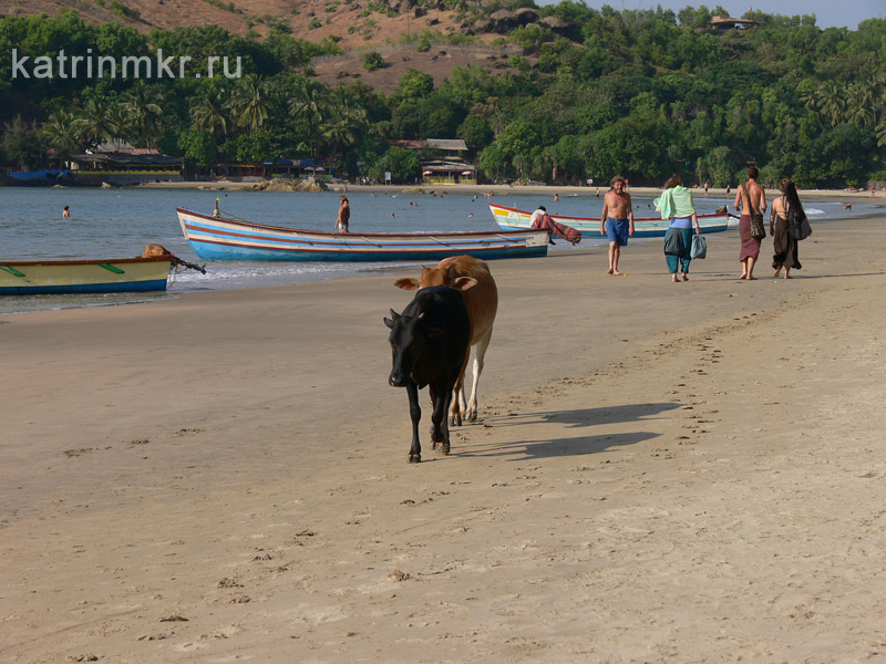 Kudle beach ( пляж Кудли)