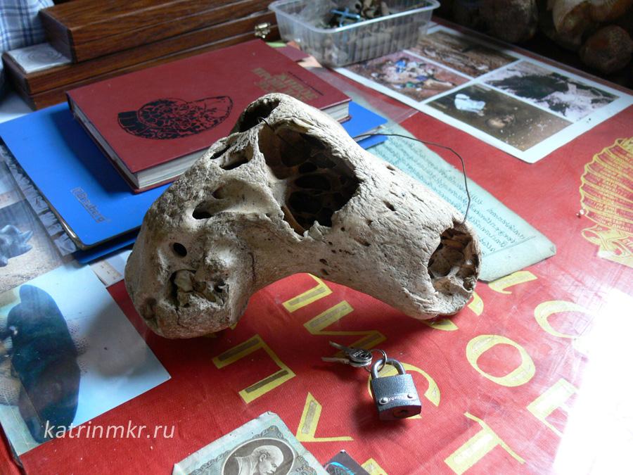 Музей в поселке Каменномостский. Инопланетный череп.